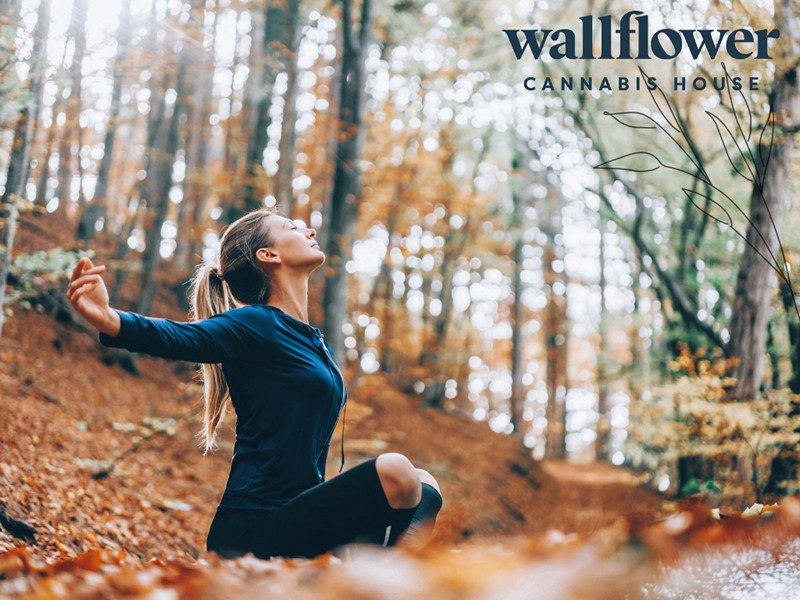 Say Hello to Fall: From New Routines to CBD, Edibles & More